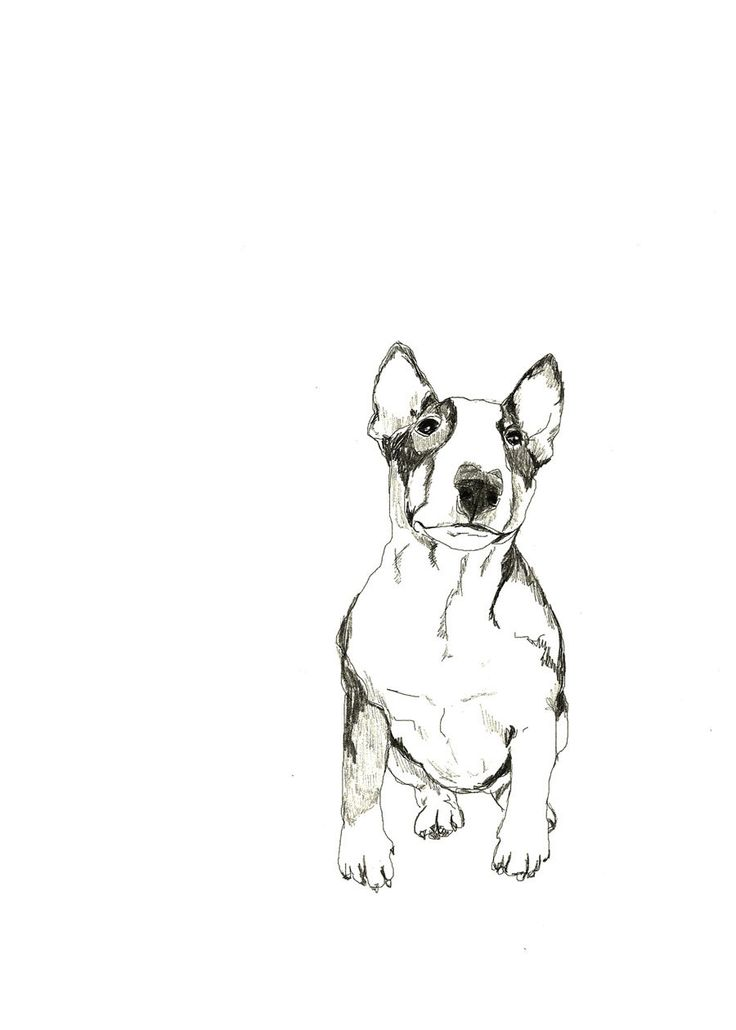 Bull Terrier - Print of Original Drawing - Dog Art, via Etsy.