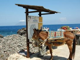 Mule, the main means of transport on Alicudi, Aeolian Islands, Messina.