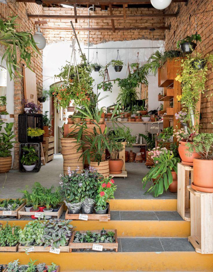 4 lugares em SP onde você encontra muitas plantas para a