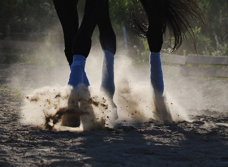 Developing these habits will turn you into a better rider and horseman...