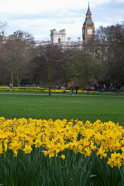 St. James's Park, London, looking towards Whitehall and the Houses of Parliament.