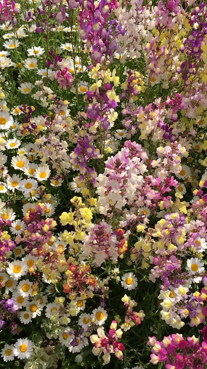 May It Reach Heaven In 2020 Garden Layout Flower Beds Everything Is Temporary
