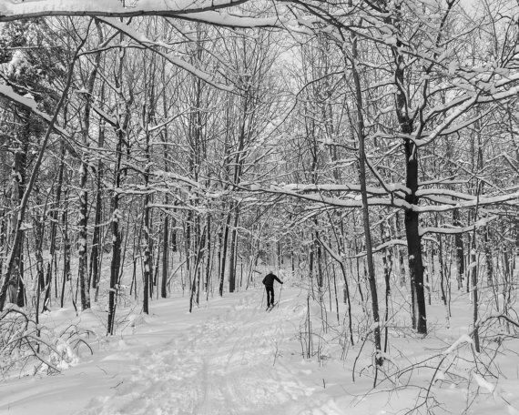 Photograph of a cross country skier, skiing through a snow covered forest, taken in Montreal, Quebec. Fine art print, Wall art print. TITLE: