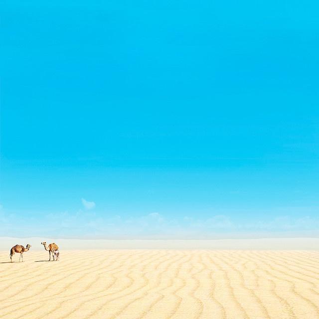 camel: Animal Camels, Animal Kingdom, Desert Sky, Camels Animal Pet, Camels Animalspet, Animal Birds, Vanessapaxton, Camels Camels, 87365