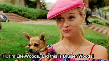 """If you're a big fan of the 2001 CLASSIC Legally Blonde, then you know the real star of the film was the little dog that played Bruiser Woods. 
