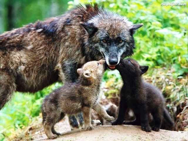 Anne ile bebek  kurtlar
