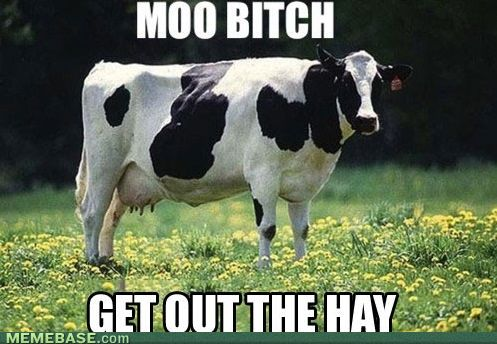 Moo, bitch.