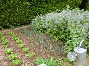 17 meilleures images propos de potager sur pinterest jardins plates bandes sur lev es et - Faire un potager debutant ...