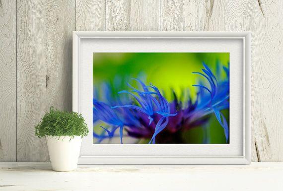 Printable cornflower photograph, macro purple flower under a warm summer sun by PlayfulPixieStudio #purpleflower #cornflower #printablewallart #macrophotograph
