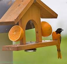Image result for baltimore oriole bird feeders