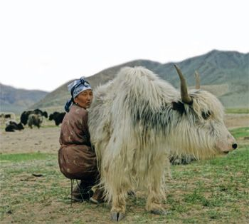 Mongolie                                                                                                                                                      Plus