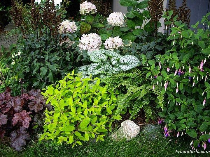 Shade garden combo - One of my shady garden corners with Heuchera (coral bells), Fuchsia magellanica var. gracilis 'Aurea', fern,  fuchsia, Brunneria, Hydrangea, Astilbe