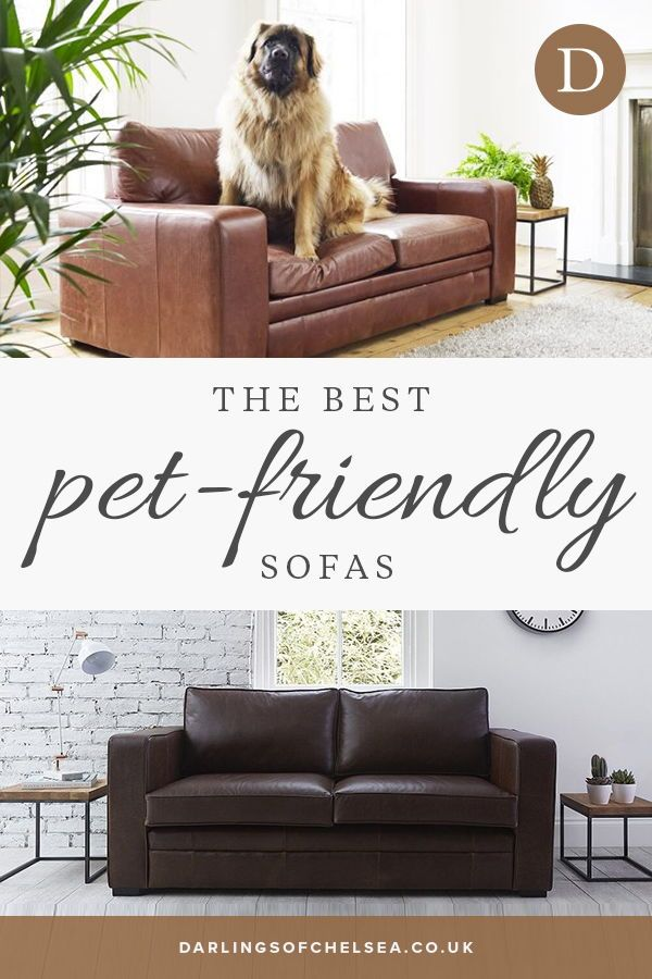 Fabric and leather sofas for pet lovers | couch | Fabric ...