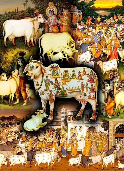 Gau Mata ki seva hi Shiv Balak Goswami Ki prathamikata hai.