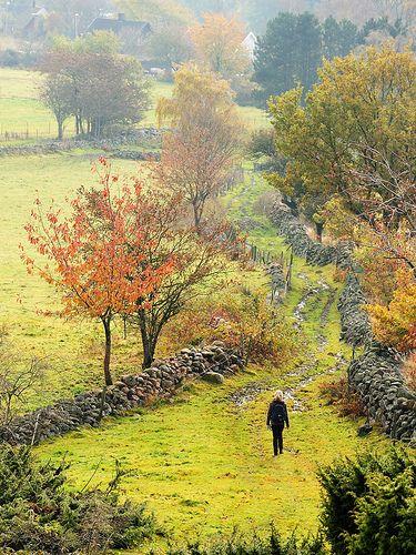 Wonderful country view in #Sweden! // Grevie Hills, Sweden, in autumn.