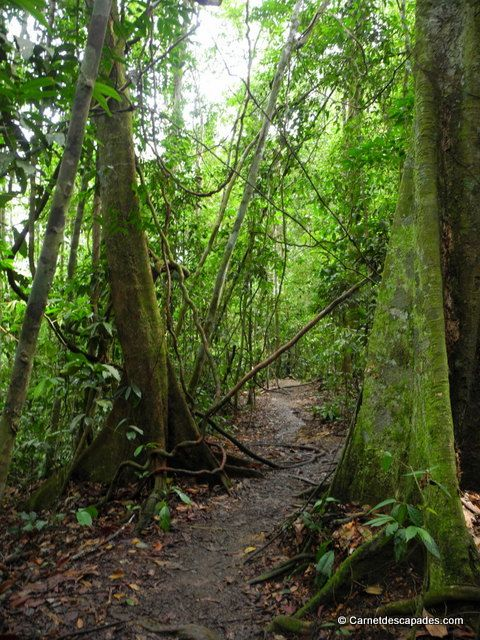 #jungle du Parc national Gunung Leuser #sumatra #indonésie