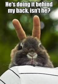 bunny meme - Google Search