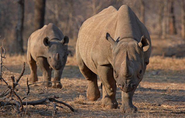 Worst year ever for poaching in province The Eastern Cape is facing its worst year ever for rhino poaching, with the