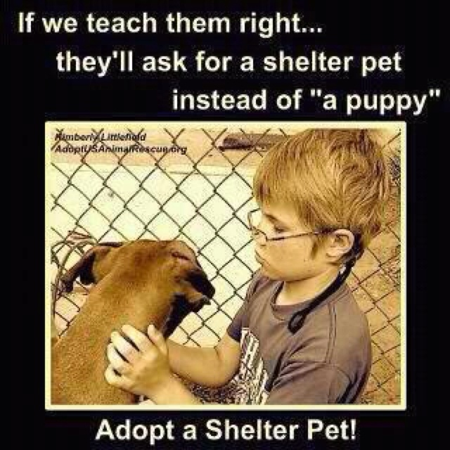 Adopt a shelter animal!