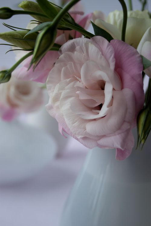 I love the range of colors in this pink lisianthus.  They last incredibly long in bouquets and arrangements...much longer than roses.