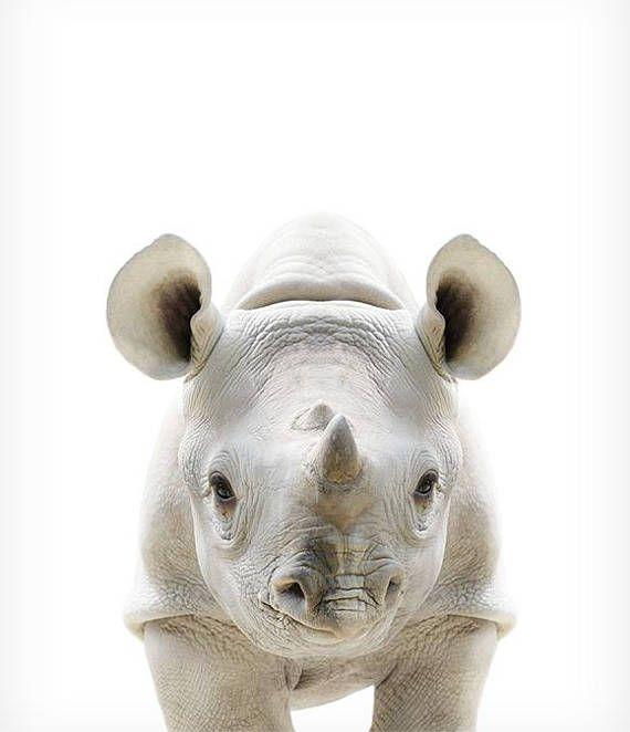 Codigo de validacion para rhinocerosl fixation