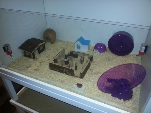 Large Tank for Small Animals, e.g. Hamster Cage with Toys 1050mm x ...