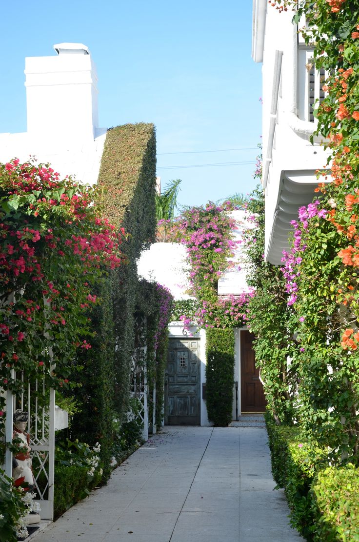 I love the different colors of bouganvilla on this walkway
