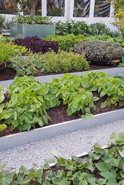 contemporary vegetable garden