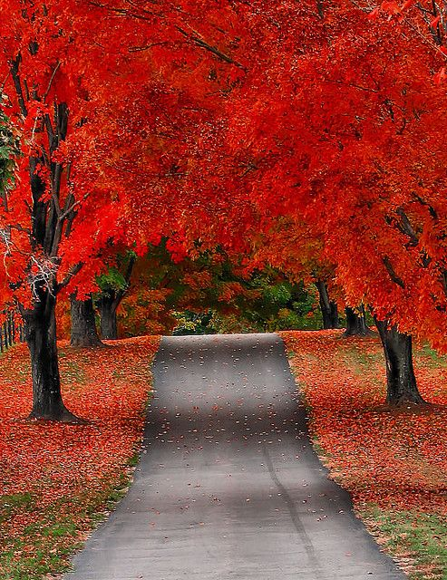 Fall red trees.