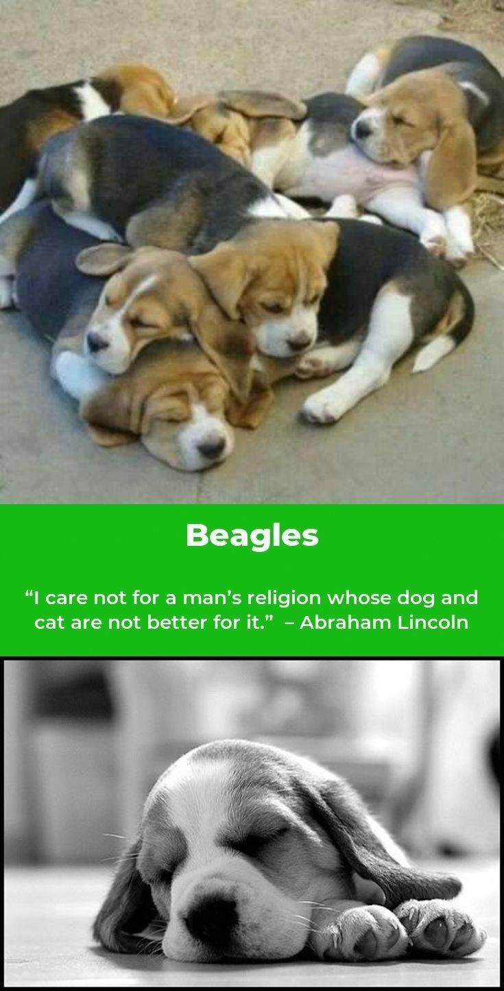 Determine Even More Details On Beagles Check Out Our Web Site