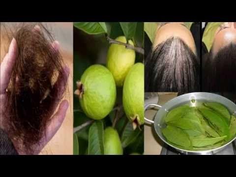Estas hojas detienen la pérdida del cabello al 100% y hacen crecer tu cabello a lo loco. Comprobado! - YouTube