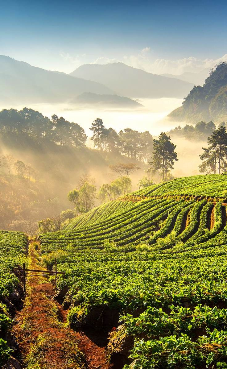 Chiang Mai - Thailand's misty, mountainous north