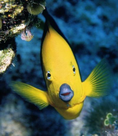 9 best Favorite Pics images on Pinterest Adorable babies, Baby - marine biologist job description