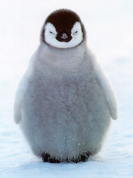 This little guy is the epitome of winter and cold... shiver.... snuggle!