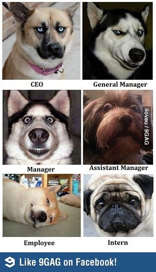 Dogs in corporate