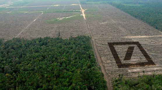 Die Deutsche Bank sucht Investoren für den Kahlschlag. Statt artenreichem Regenwald sollen in Indonesien und Afrika bald noch mehr großflächig Palmöl-Monokulturen entstehen