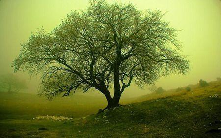 misty from nature on desktopnexus