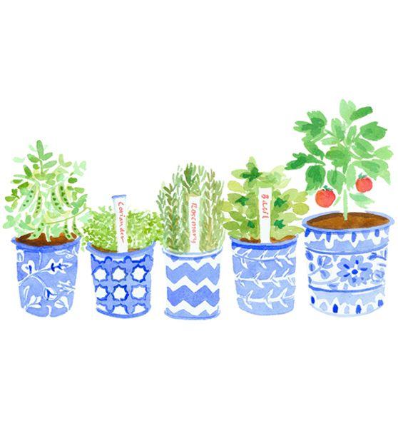 Little herb garden by Caitlin McGauley