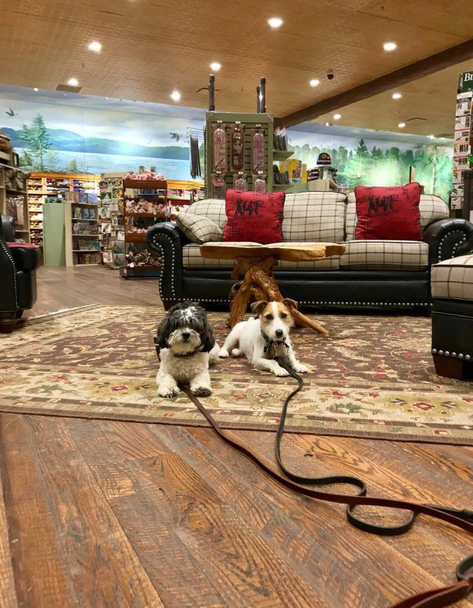 65 The Most Dog Friendly Stores in America, Where You Can