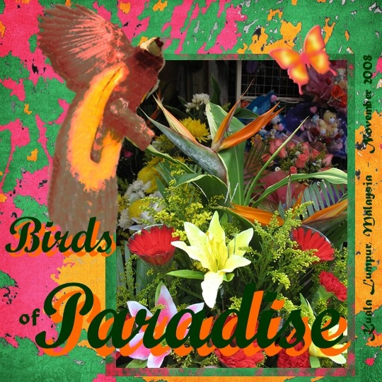 Birds of Paradise - Scrapbook.com