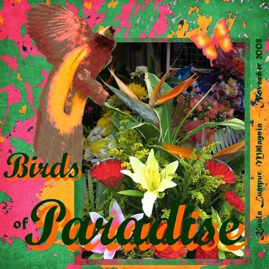 Birds of Paradise - Scrapbook.com