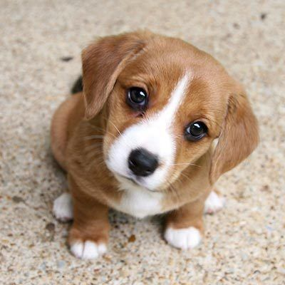 Sweet animals – # sweet # animals