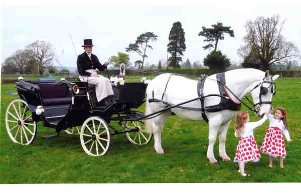 Sussex Carriage Horses - Horse and Carriage Hire