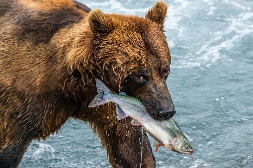 A Fresh Catch