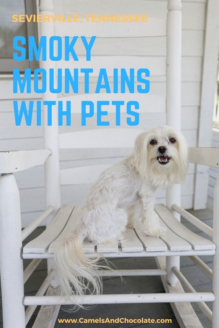 Smoky Mountain Vacation: Planning the Perfect Weekend Escape to Sevierville, Tennessee with Your Pup