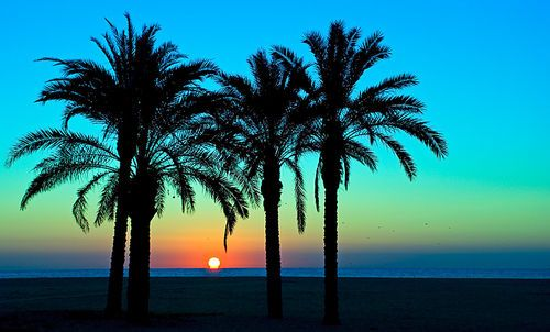 palm tree sunset: Sky, Blue, Colors, Palms Trees, Summer, Beautiful Sunsets, Places, Beaches Sunsets, Heavens