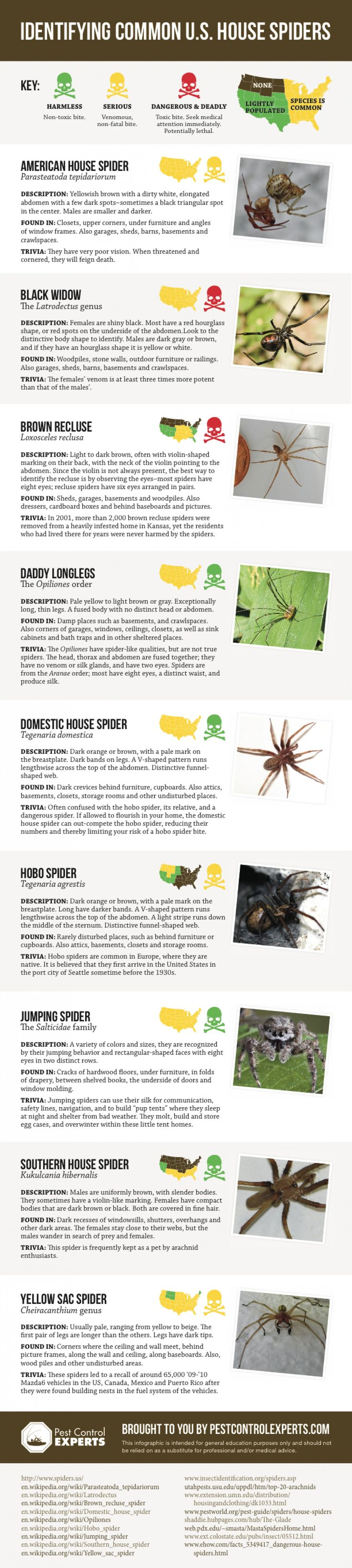 This picture has several different types of spiders. Such as a house spider, daddy long legs and others. It also says how dangerous there bites are