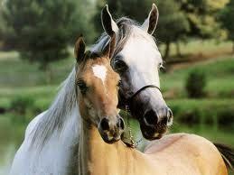 free horses - Cerca con Google