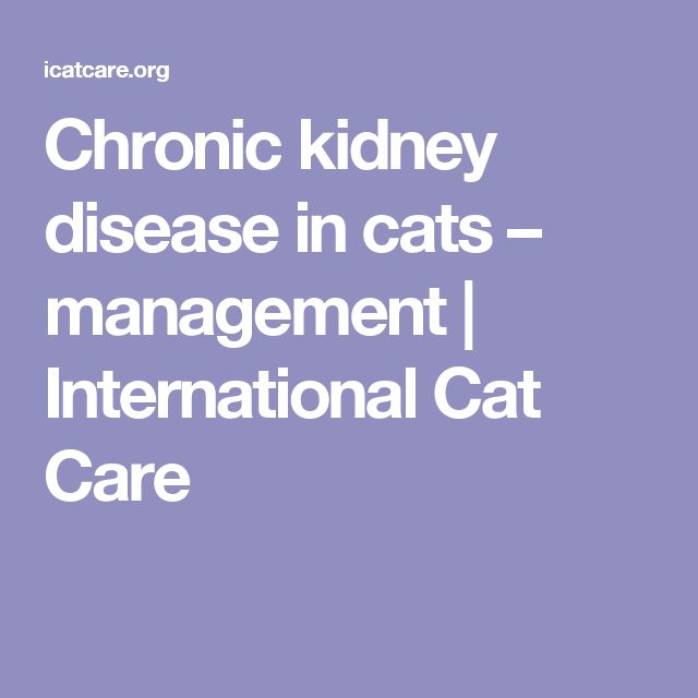 Chronic kidney disease in cats – management | International Cat Care