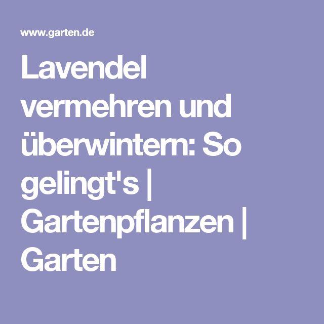 Lavendel vermehren und überwintern: So gelingt's | Gartenpflanzen | Garten
